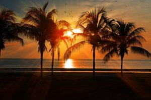 ocean sunset with palm trees
